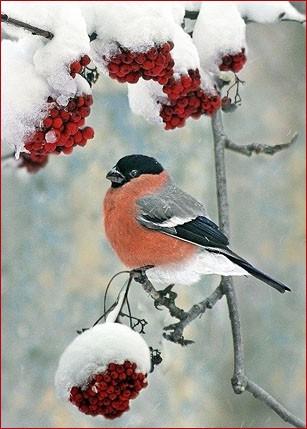Снегирёк 3