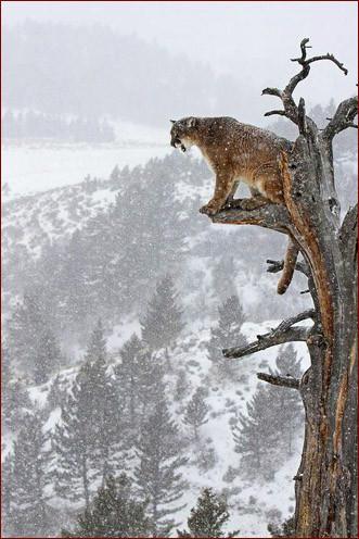 На дереве 1