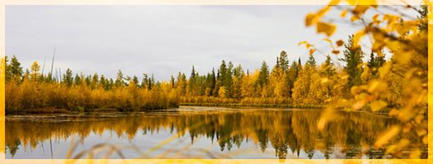 Осенний пейзаж Vasiliy Sorokhan