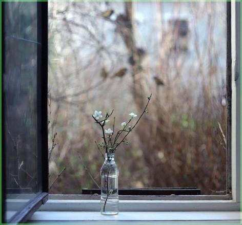 Ветка на окне
