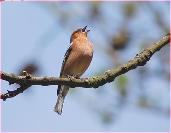Птичка певчая 2