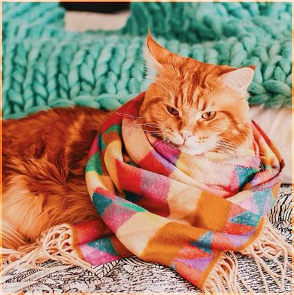Рыжик в шарфике
