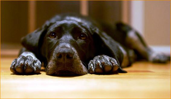 Верный пёс