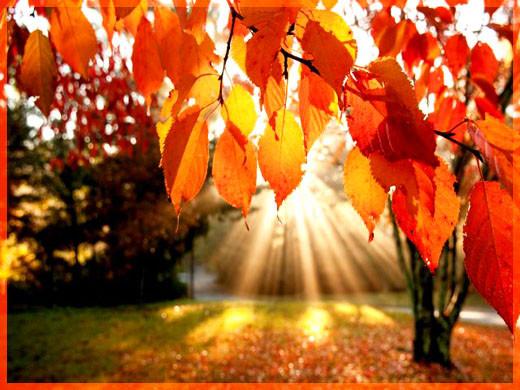 Осеннее солнце 2