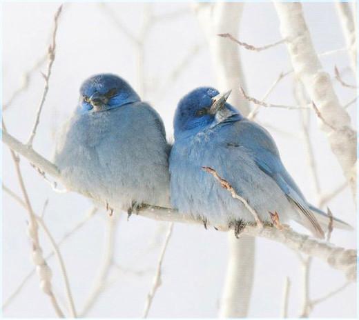 Две птички 3