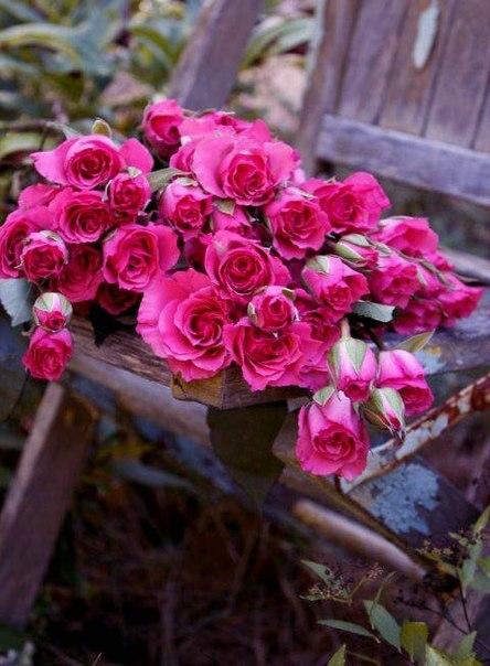 Розовое 1
