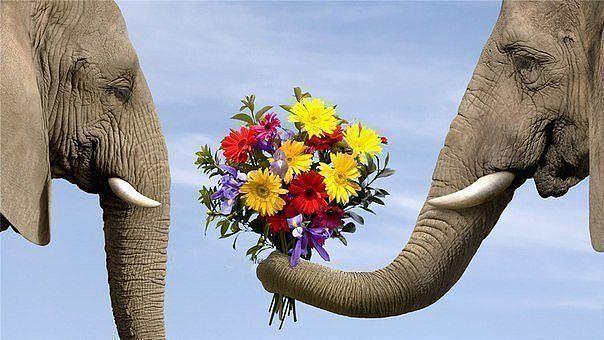 Любовь и слоны