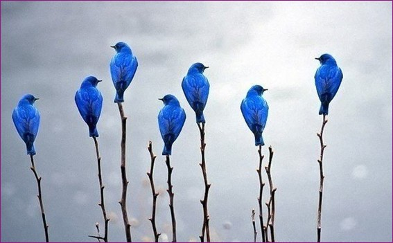 Голубые птички