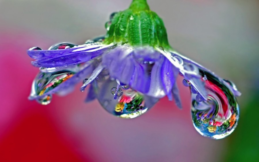 Капли росы на цветах 23