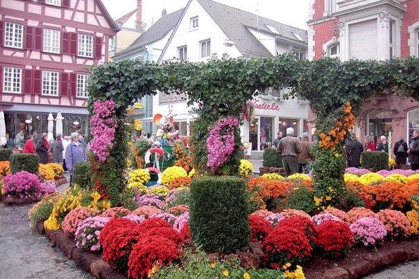 Фестиваль хризантем 2