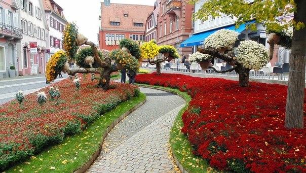 Фестиваль хризантем 4