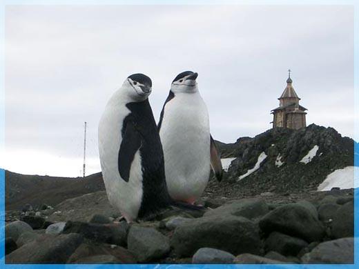 Храм и Пингвины