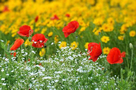 Цветочная поляна ElenaR
