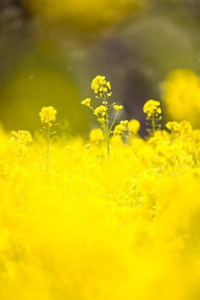 Жёлтое3