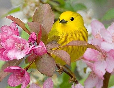 Жёлтая птичка