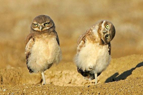 Две совы 4