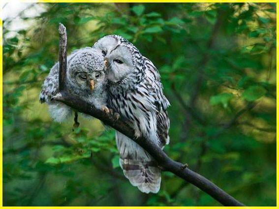 Две совы 2