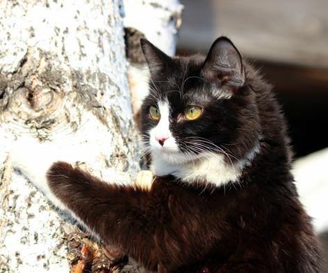 Вот это кот