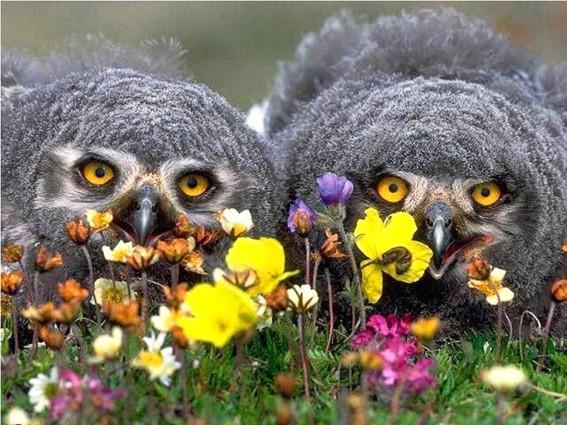 Две совы 3