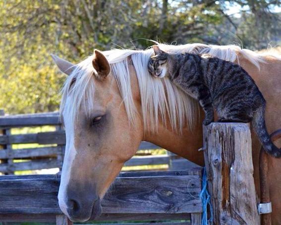 Лошадка и кот 2