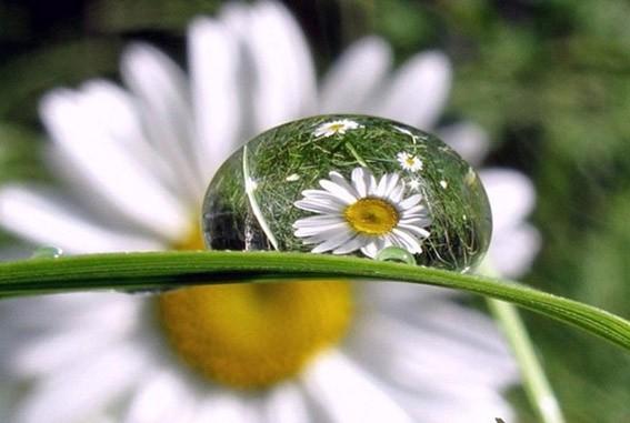 Капли росы на цветах 50