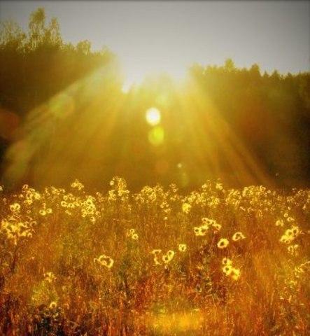Лучи Солнца 4