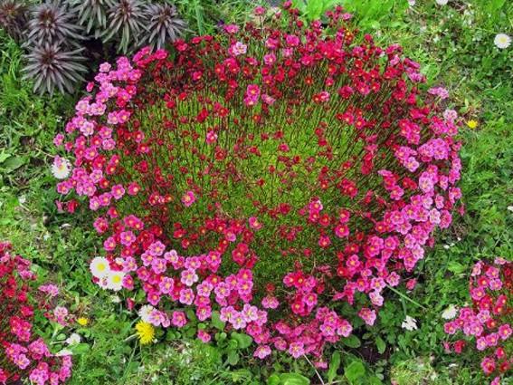 Сердце чветочное