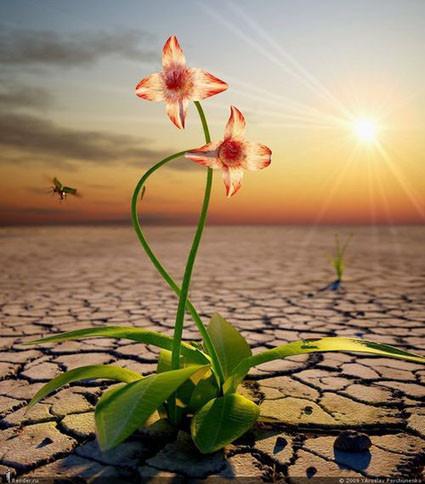 Цветок в пустыни