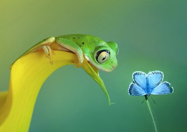 Лягушка и цветок
