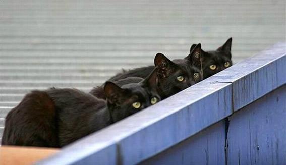 Три кота 2