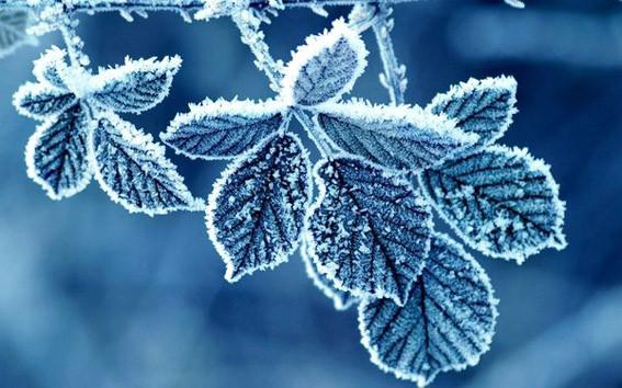 Листочки на морозе