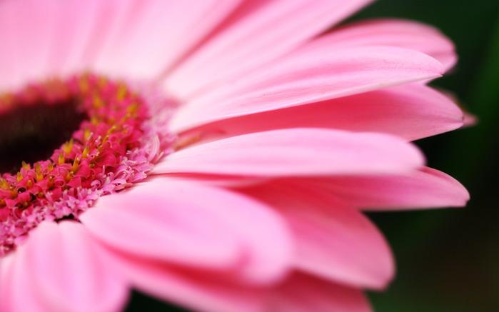 71758692_Pinkflower