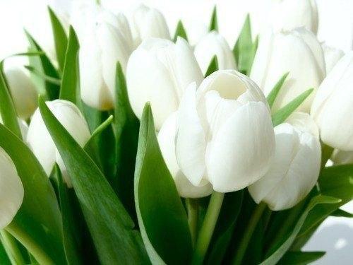 h фото белых цветов