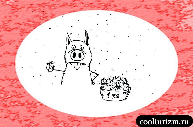 Свинни и клубника