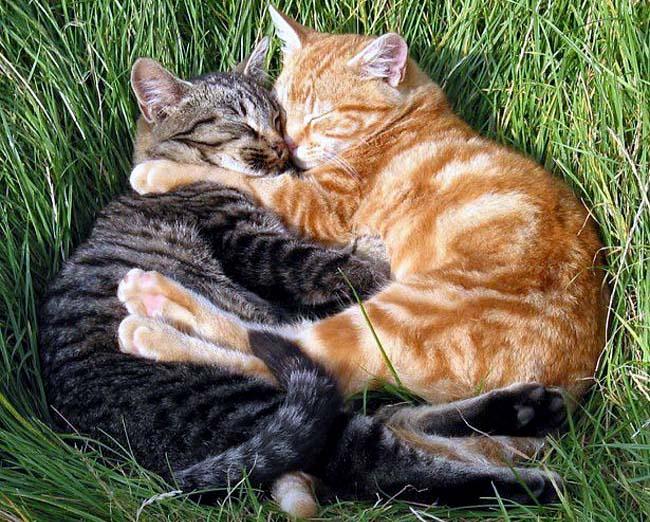 Картинки по запросу мартовские коты
