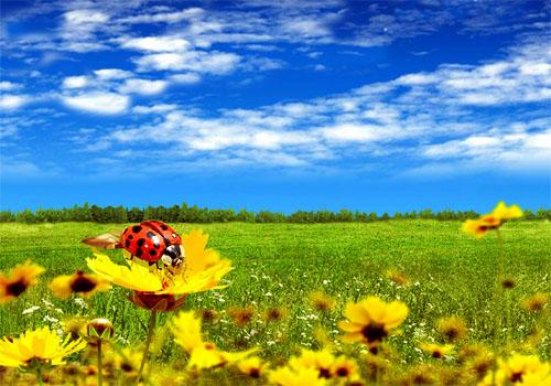 http://ic.pics.livejournal.com/sviridenkov/12934488/462753/462753_original.jpg