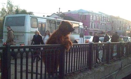 медведь на улице в России
