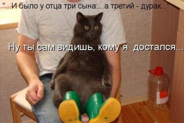 коты, юмор