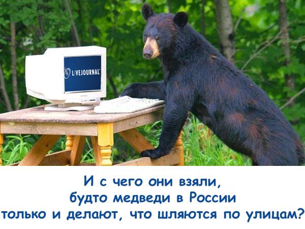 Живой Журнал и медведь, приколы