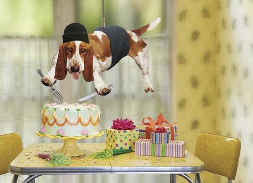 собака с тортом