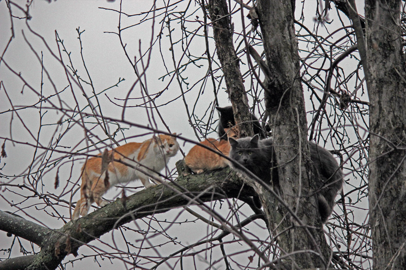 treeskats
