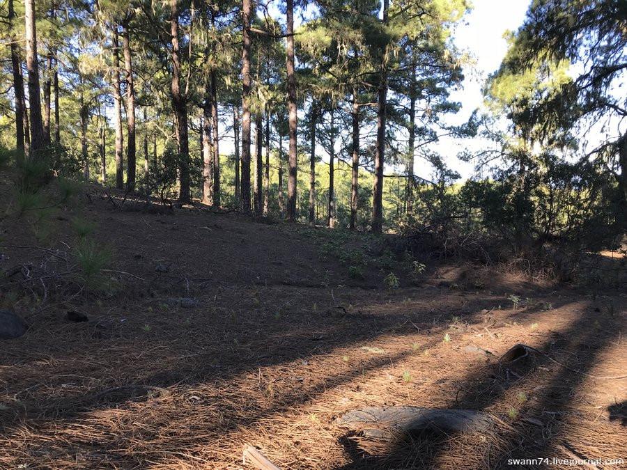 Национальный парк Tamadaba, Гран Канария