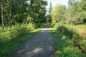 Аллея в Баболовском парке. Август.