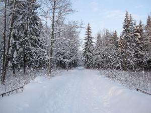Аллея в Баболовском парке. Январь.