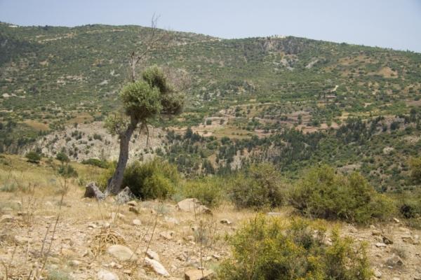 Окрестности Пафоса, Кипр.