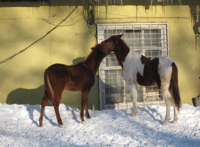 Конюшня в Екатерингофском парке, февраль.