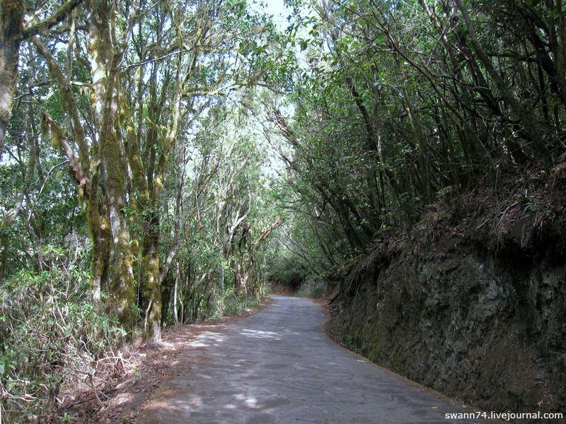 Природа острова Ла Гомера