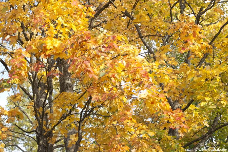 Осень в Ораниенбауме