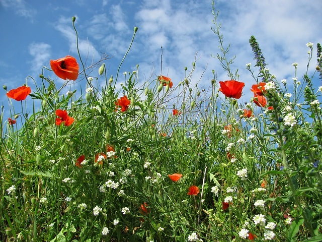 meadow-366613_640