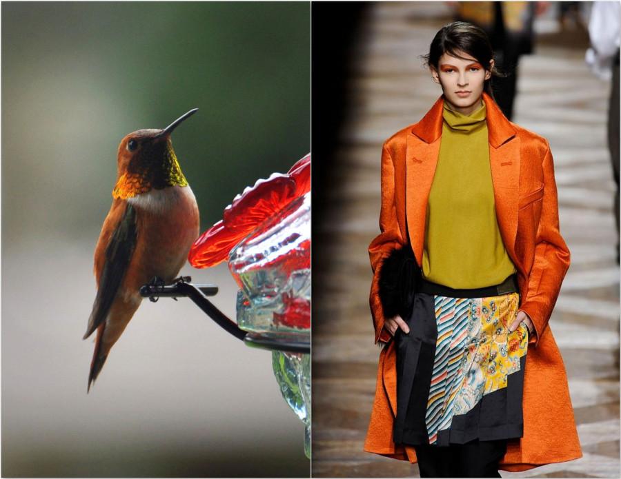 Rufous and Oriental fashion